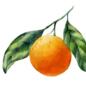 Ölmühle Solling Orange Vinegar Cream / Orange Vinegar Cream