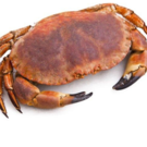 Lebende essbare Krabben