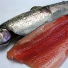 Forellenkwekerij Zederik Cold smoked salmon trout