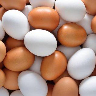 Eko-ei 10 biologische eieren