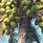 Ölmühle Solling Kokosmehl und Kokosraspeln