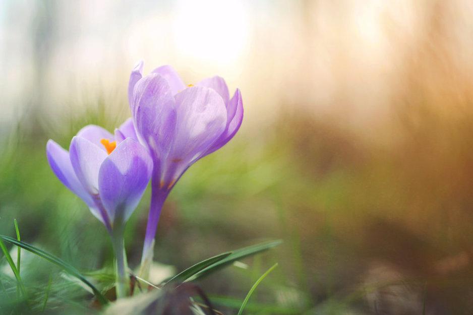 Fotografie ideeën en inspiratie voor de lente