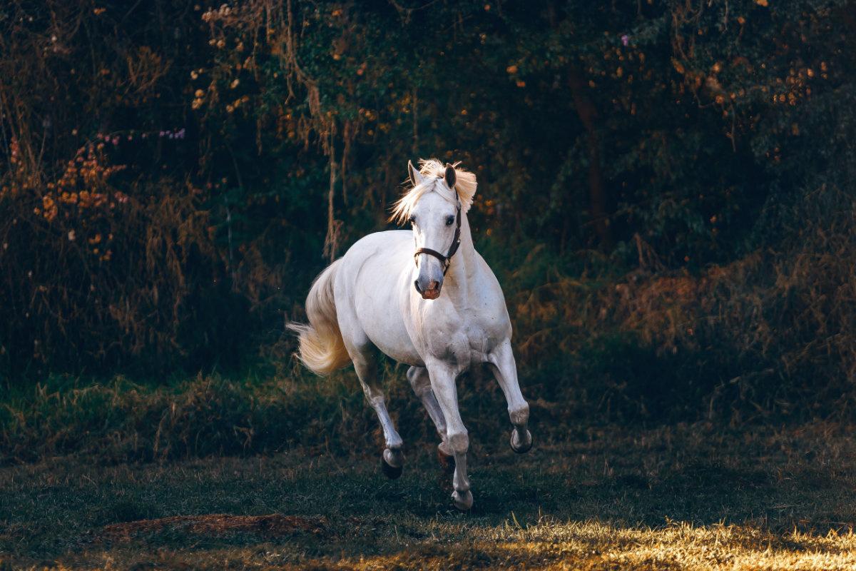 Paard, sluitertijd 1/1000