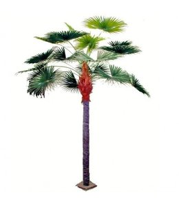 Fan Palm Giant 375cm