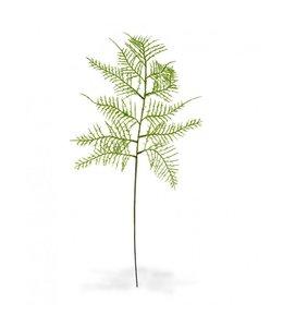 Asparagus tak 55 cm
