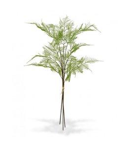 3x Asparagus tak 85 cm