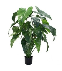 Philodendron XL 120cm