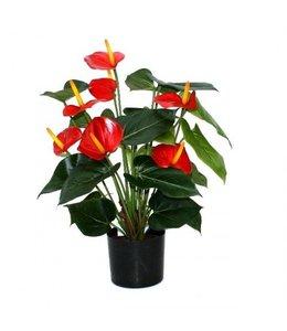 Anthurium de luxe rood 50 cm