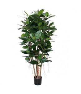 Philodendron Kolom 155cm