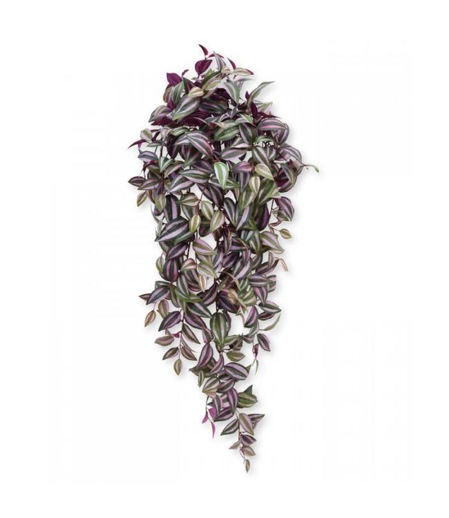 Tradescantia hangplant 100 cm paars