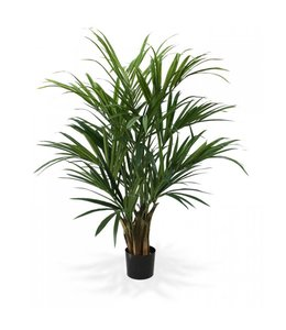 Kentia Palm XL Deluxe 140 cm
