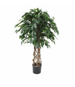 Ficus Exotica OS bol 125cm