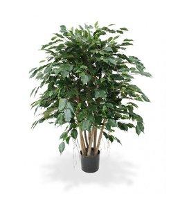 Ficus Exotica XL 110 cm