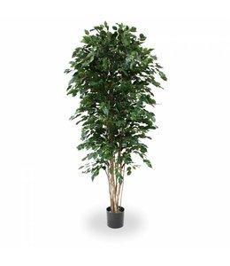 Ficus Exotica Deluxe 210cm groen
