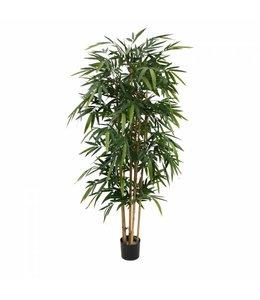 Bamboe 180cm