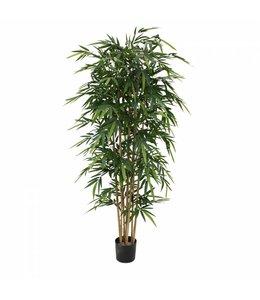 Bamboe 210cm