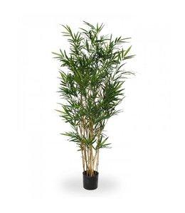 Royal Bamboe groen 165 cm