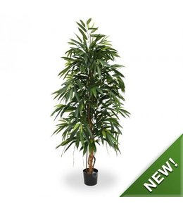 Ficus Longifolia Royal 175 cm kunstboom
