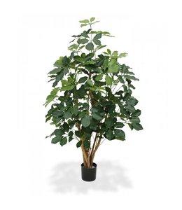 Schefflera Exotica 120 cm