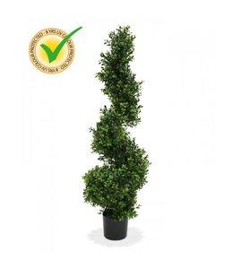 Buxus Spiraalboom de luxe 100 cm UV