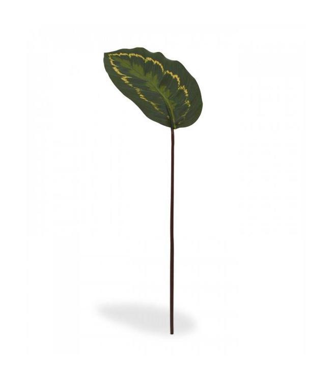 Roseopicta kunsttak 50