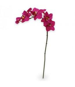Phalaenopsis Orchidee 80 cm paars