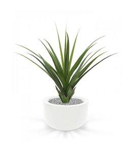 Ananas plant 80cm