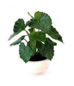 Alocasia Calidora 60 cm kunstplant