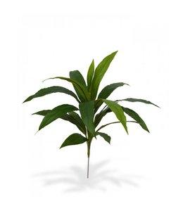 Draceana Boeket 60 cm groen