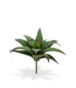 Haworthia Vetplant boeket