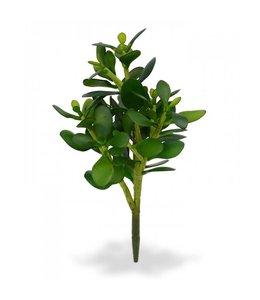 Crassula Boeket 30 cm
