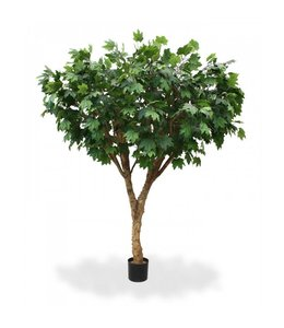 Maple De luxe 240 cm