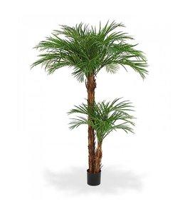 Areca Palm x2 Deluxe 225cm