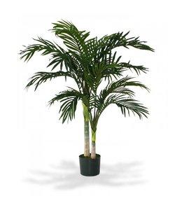Golden Cane Areca Palm 120 cm