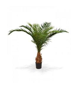 Canarie Phoenix Palm Deluxe 210 cm