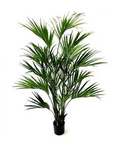 Kentia Palm XL Deluxe 190cm