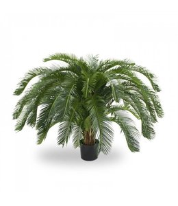 Cycas Palm Deluxe 125cm