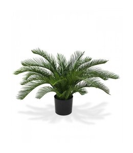 Cycas Palm 60cm Deluxe