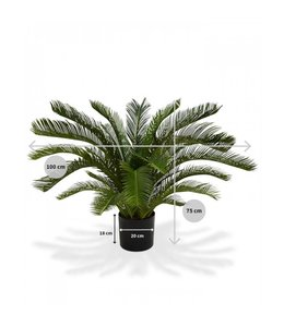 Cycas Palm M 80cm Deluxe