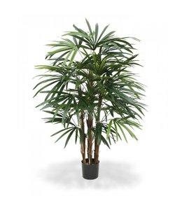 Raphis palm Deluxe 100cm