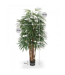 Raphis palm 160cm