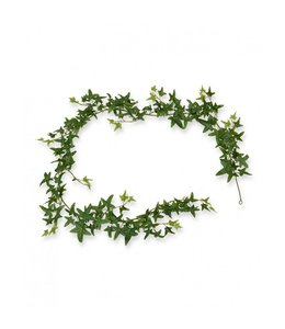 Ster Hedera Guirlande 180 cm groen