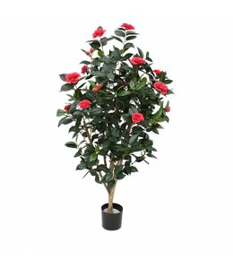 Camelia Japonica Deluxe 150cm rose