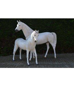 Duo paarden