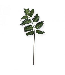 Pteris Varen blad 50 cm