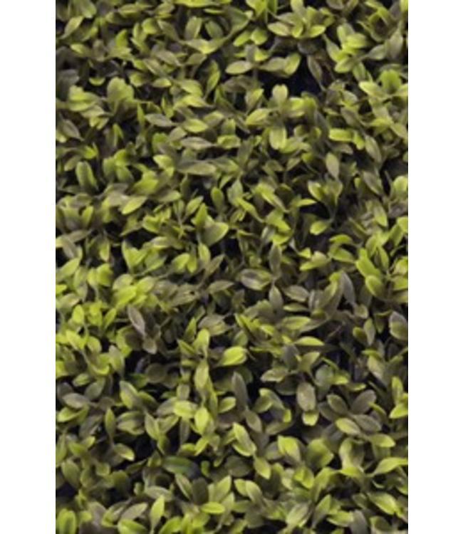 Easydeko Buxus green Velvet