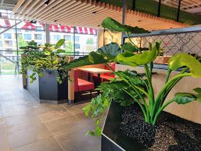 Kunstplanten.nl project KFC Groningen Olifantsoren en scindapsus