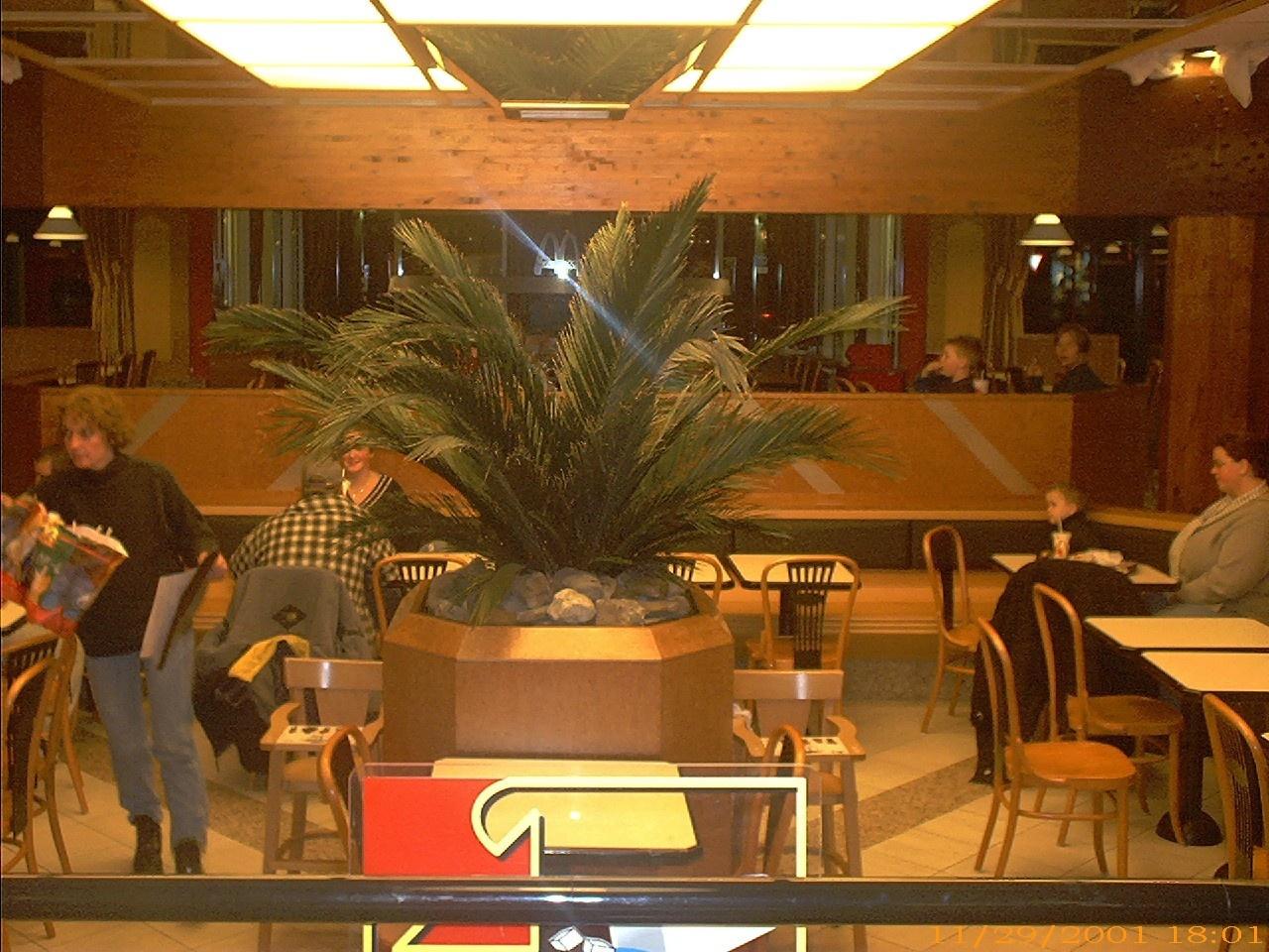 Kunstplanten.nl project McDonalds Duiven Phoenix Canariensis MUMMIE palm