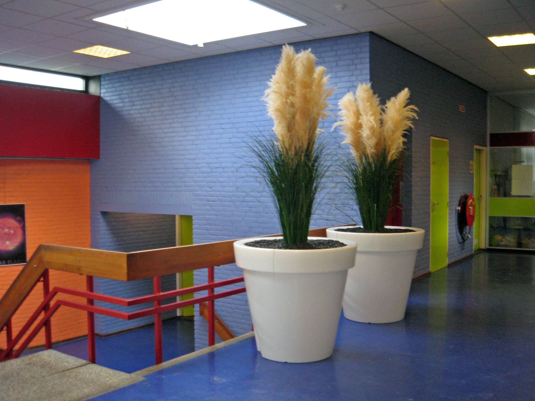 Kunstplanten.nl project Ichtus College Kampen Mummygras