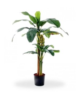 Bananenboom  145 cm